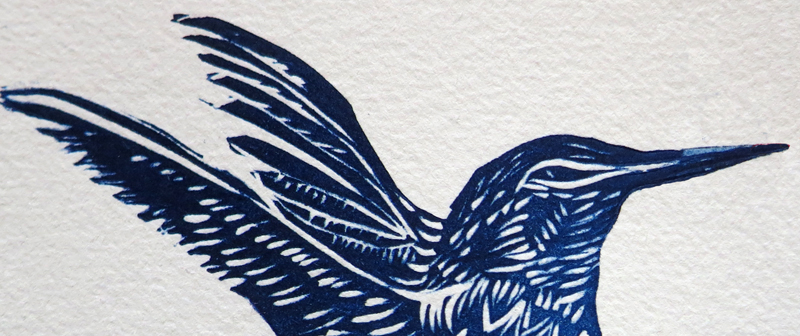 Hummingbird detail
