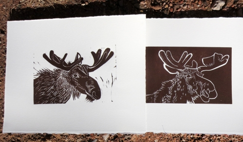 mooseface, moose, brown moose, adirondack moose,