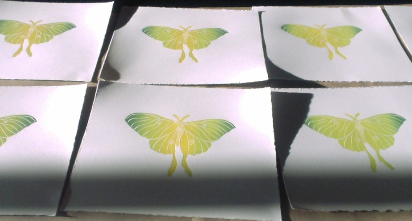 Luna moth print drying