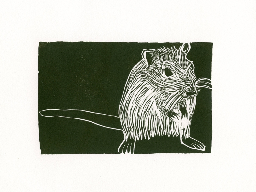 "Full size paper of the Gerbil 10"" x 8"""