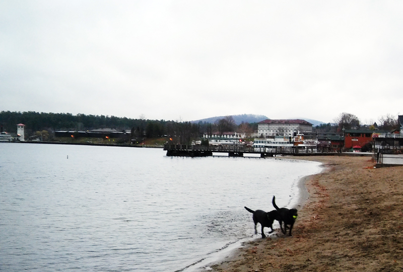 3_lake_george_dogs_play
