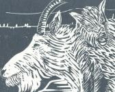 Detail of linocut Mountain Goat