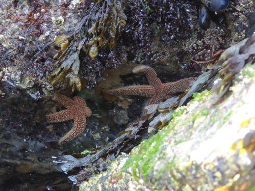 Hilary_lorenz_Cscape_dune_shack_Ptown_Starfish