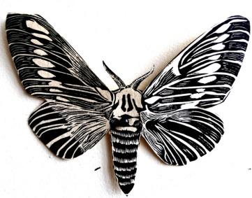moth_migration