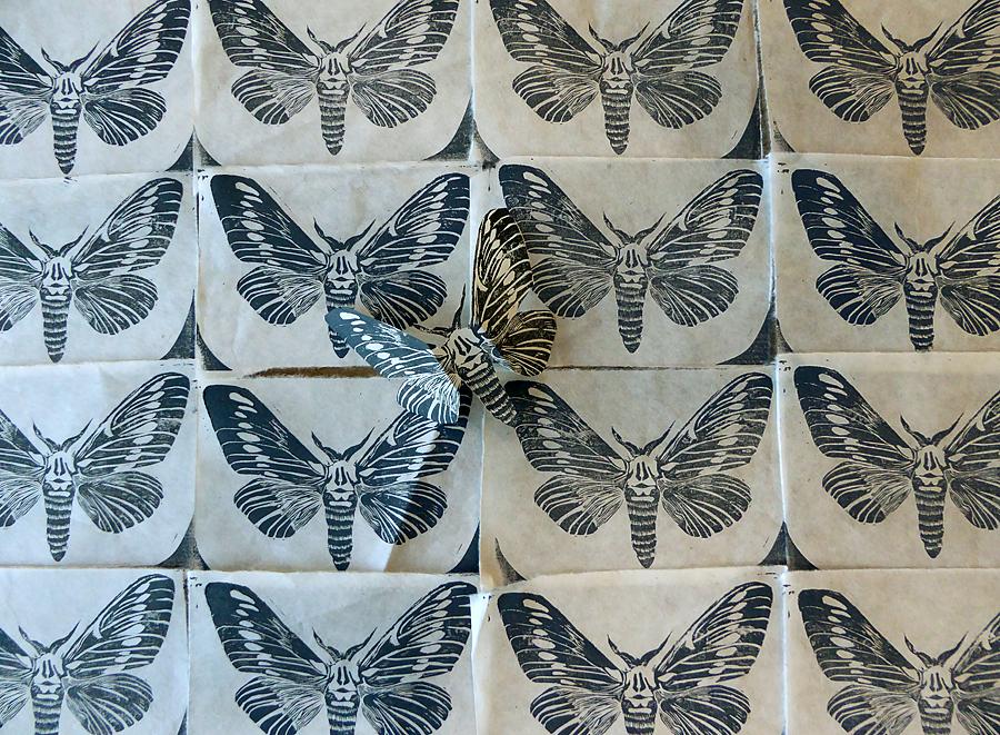 table_of_moths_lorenz