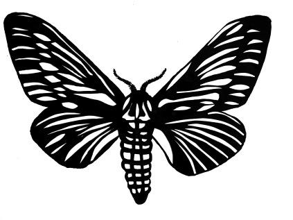 new_moth
