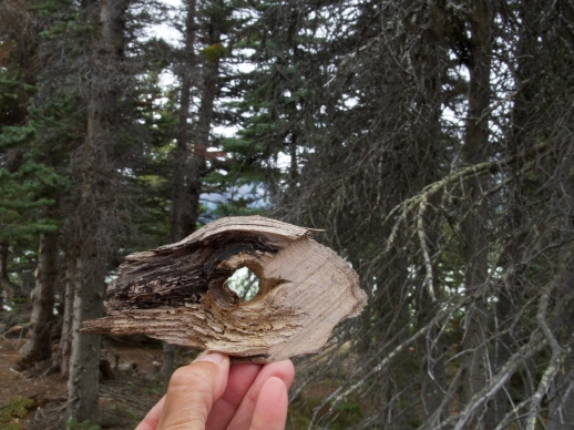 Me playing around with pieces of wood I found at Lindeman Lake