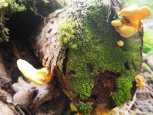 Loads of cool fungi on the trail.