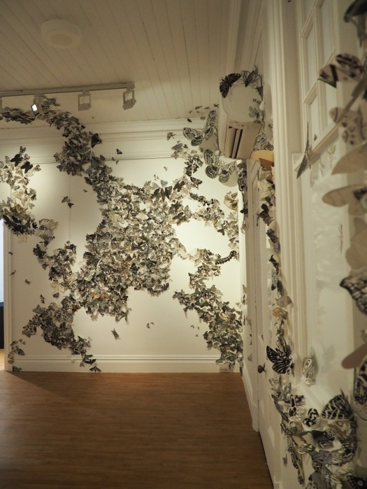 Moth Migration Project at Bundaberg Regional Gallery